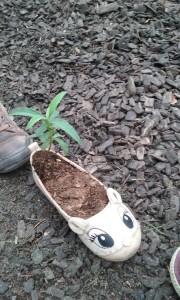 Zapatito plantado