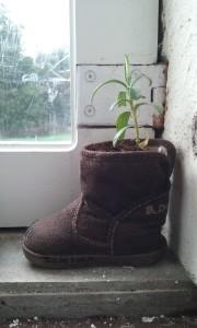 Botita plantada
